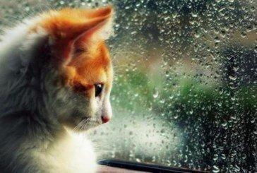 У середу буде вітряно й дощитиме