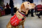 Собак навчать винюхувати хворих з коронавірусною інфекцією