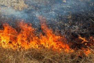 На Тернопільщині через спалювання сухої трави могли згоріти 7 житлових будівель