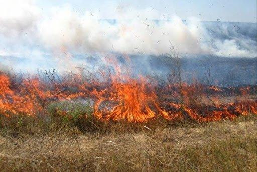 На Тернопільщині вже згоріло 240 гектарів сухої трави