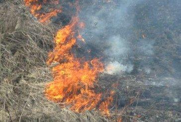 На Тернопільщині горіло 5 га сухої трави, а могло зайнятися й 40 га лісу