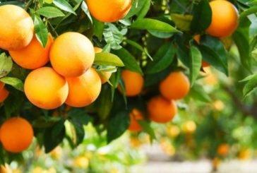 В Іспанії апельсини перероблятимуть на... електрику