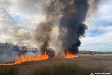 Палять сухостій, попри карантин і Великдень: у Тернополі масштабна пожежа біля Серету