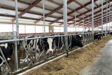 В Естонії дефіцит робочої сили в агросекторі: раніше виручали українці