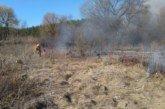 На Кременеччині через підпал сухої трави могло згоріти 40 гектарів лісу