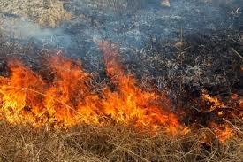 На Тернопільщині й далі горить суха трава: пожежні врятували 23 гектари лісу