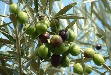 Плодовим деревам у Європі загрожує зникнення