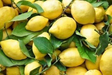 Туреччина заборонила експорт лимонів до кінця літа