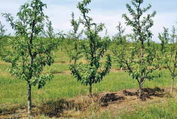 У Європі висадять три мільярди дерев
