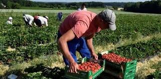 Польщі критично не вистачає робочих рук з України