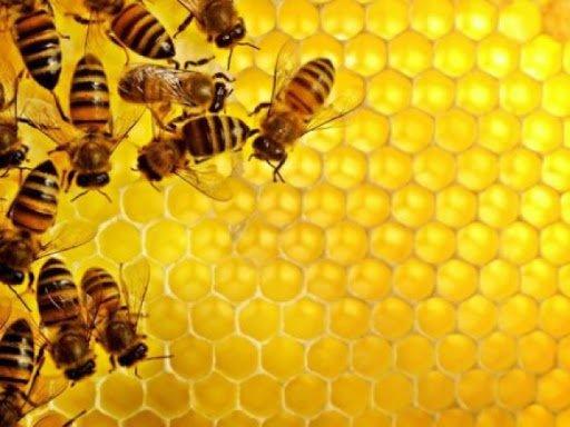 Весняного меду буде мало – через холод та масові отруєння бджіл