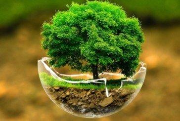 Збереження та охорона земель: аналіз і пропозиції від студентів ТНЕУ