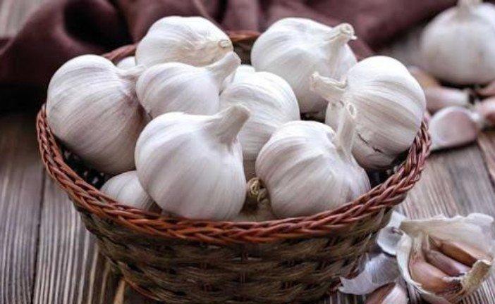 Часникові премудрості: як отримати гарний врожай і вберегтися від хвороб
