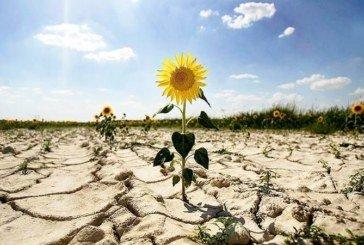 У Чехії - найсильніша за 500 років посуха