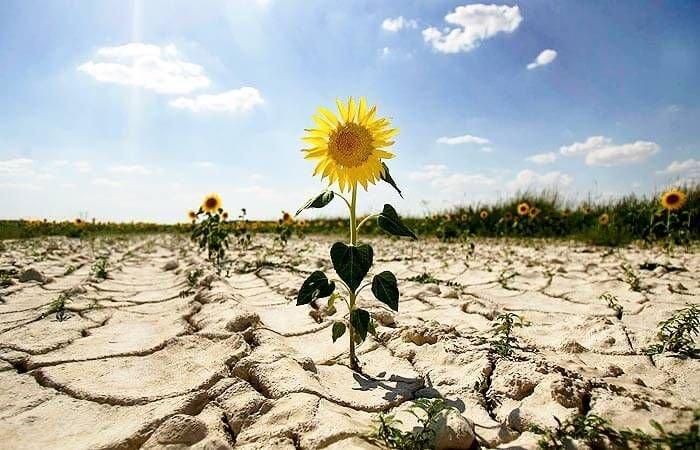 У Чехії – найсильніша за 500 років посуха