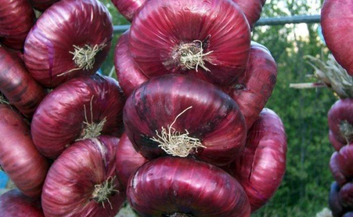 Червона цибуля знизить холестерин
