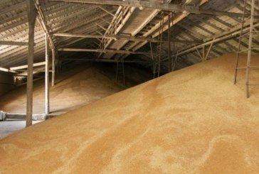 В Україні щороку розкрадають сотні тисяч тонн пшениці