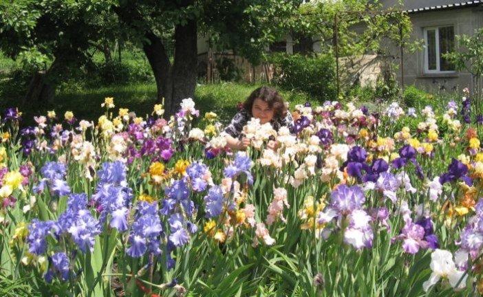 «Любов до ірисів успадкувала від бабусі і продовжила її справу»: у колекції тернополянки – понад 300 сортів цих квітів (фото)