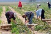 Чеські підприємці – на межі банкрутства без українських заробітчан