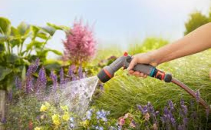 Поливайте рослини правильно