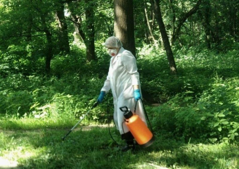 Тернополян просять не йти в парки: знищуватимуть кліщі