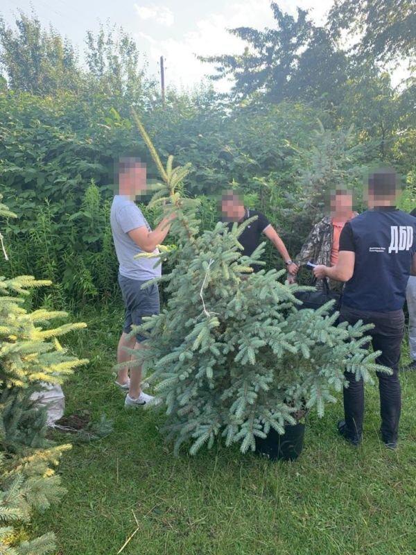 «Бізнес» на деревах: на Тернопільщині спіймали на хабарі працівника державного лісництва