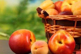 Десерти з абрикосів і персиків: 12 рецептів з ароматом літа