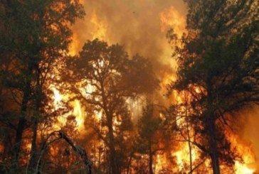 В Україні площа пожеж у лісах зросла в 40 разів