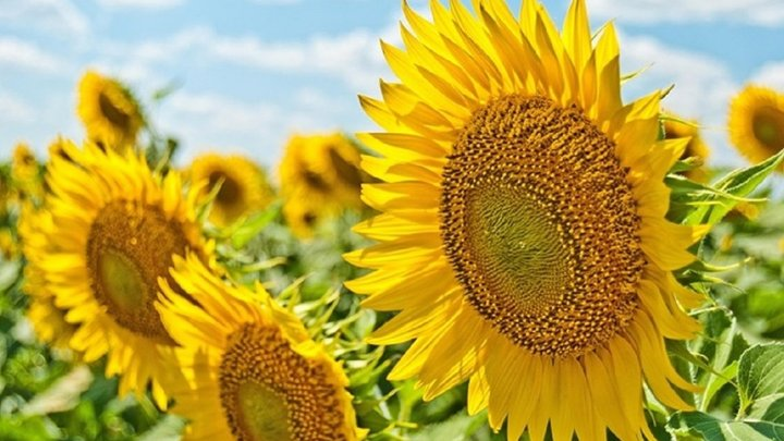 Дощі і спека: погода 11 серпня дивуватиме українців контрастами