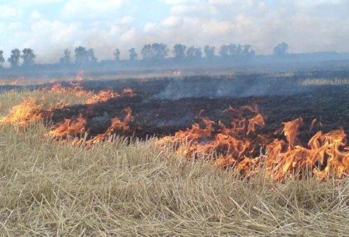 На Тернопільщині починають спалювати стерню
