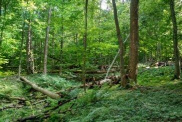 """Загублений світ у лісах Тернопільщини: працівники Національного природного парку """"Кременецькі гори"""" створили незвичні маршрути для знайомства з дикою природою (фото)"""