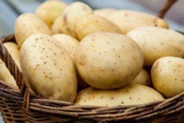 На Шумщині збирають картоплю на потреби лікарні