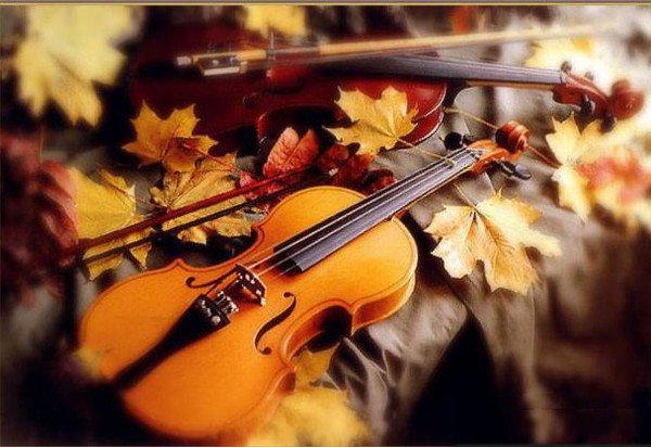 Маестро, скрипка і осінній кіт