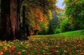 Сьогодні починається золота осінь