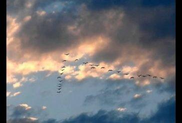 Лиш журавлі летіли, не жаліючи крил…