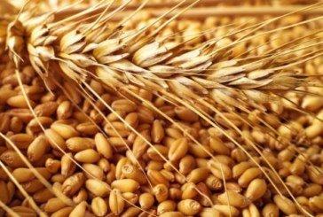 Тернопільщина - в трійці лідерів за врожайністю зернових