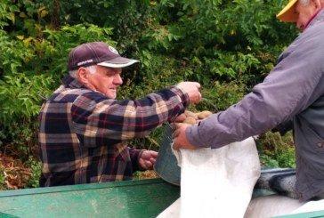 На Шумщині збирають картоплю для медзакладів (ФОТО)
