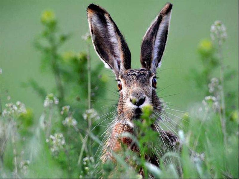 На Тернопільщині скоро розпочнеться сезон полювання