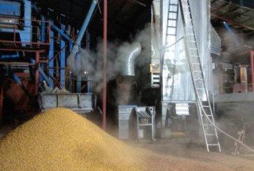 На Тернопільщині сталася пожежа на території агропромислового підприємства: згоріла кукурудза