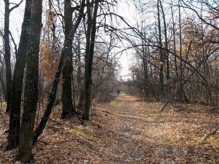 Вівторок на Тернопільщині буде по-листопадовому «теплим»