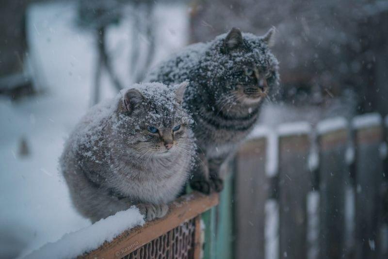 На Тернопільщині очікується мокрий сніг і буде холодно