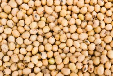 В агропідприємстві у Козові згоріли 30 тонн сої