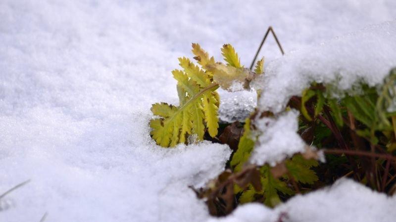 Перший день зими: якою буде погода на Тернопільщині