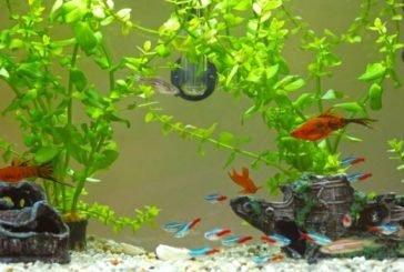 Нетверезий тернополянин зашпортався, впавна акваріум і дістав серйозні травми