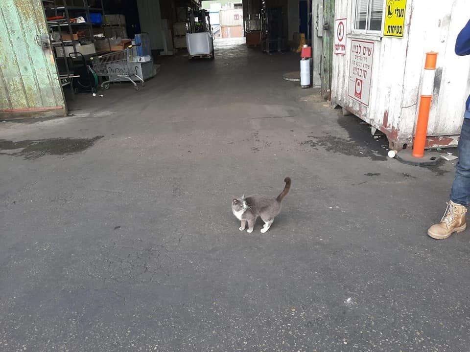 Український кіт «зайцем» потрапив до Ізраїлю в контейнері з цукерками