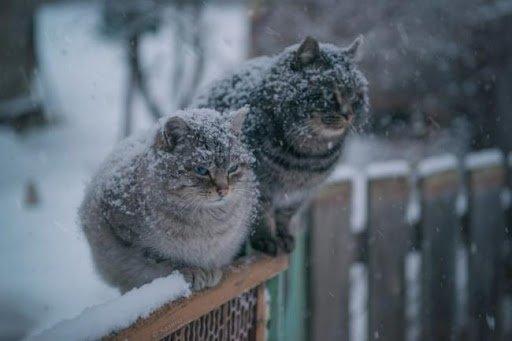 На Тернопільщині в середу сніжитиме