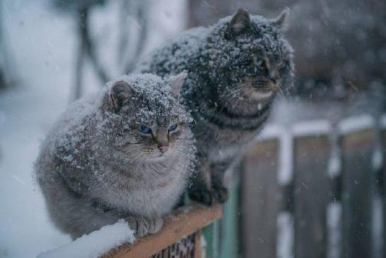 Неділя на Тернопільщині буде хмарною і холодною