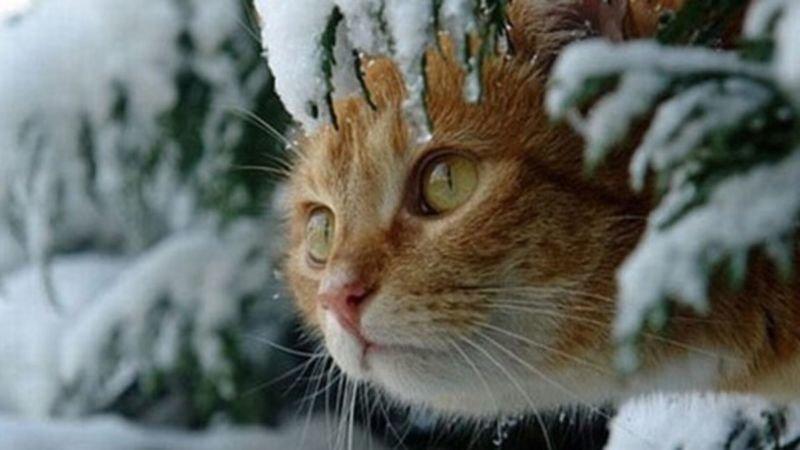 На Тернопільщині на Водохреще буде морозно і снігом може потрусити
