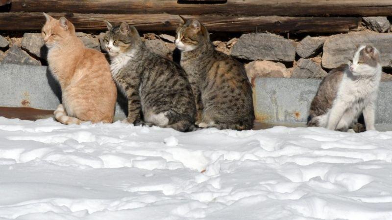 На Тернопільщині в середу нарешті потепліє