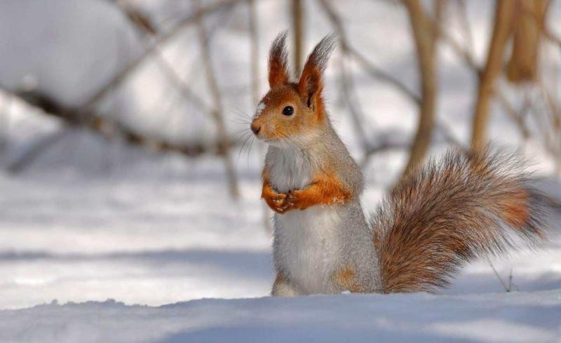 П'ятниця на Тернопільщині буде погідною та по-зимовому теплою